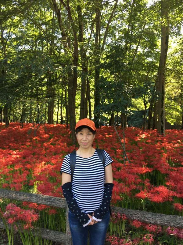 In autum. red lilies are in full bloom in Saitama,