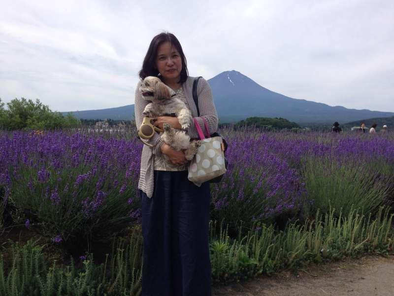 Lavender and Mt. Fuji in Yamanashi pref.