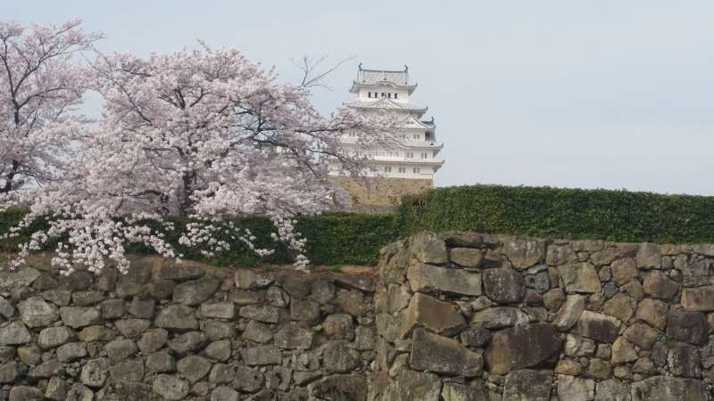 Himeji castle (Spring season)