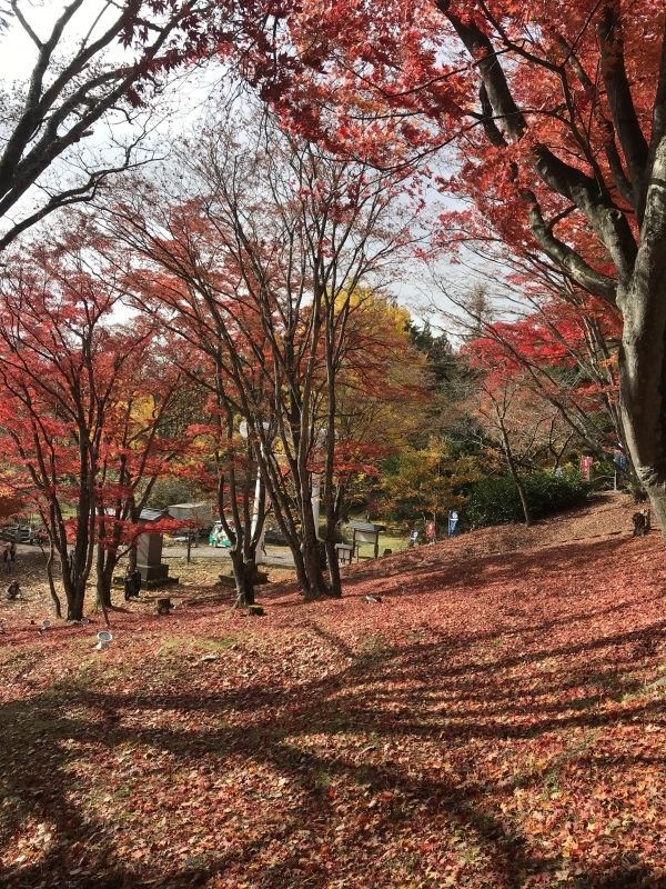 You will enjoy each colorful seasons  in Japan.