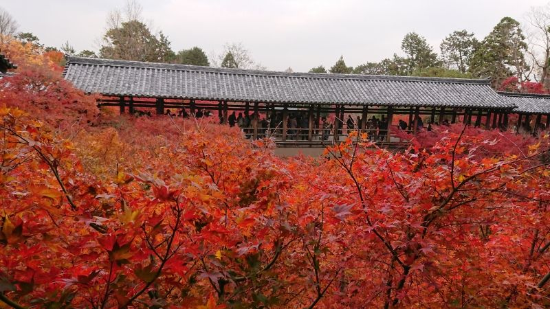Tofukuji-Temple