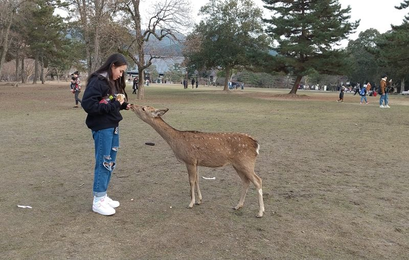 Lovely girl with a deer