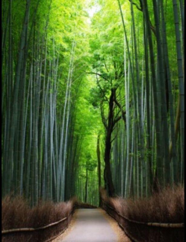 Arashiyama area: Bamboo Forest , one of my favorite spots because of its breathtaking view/ Arashiyama Gegend: Bambuswald, einer von meinen Lieblingsorten wegen seiner atemberaubenden Aussicht
