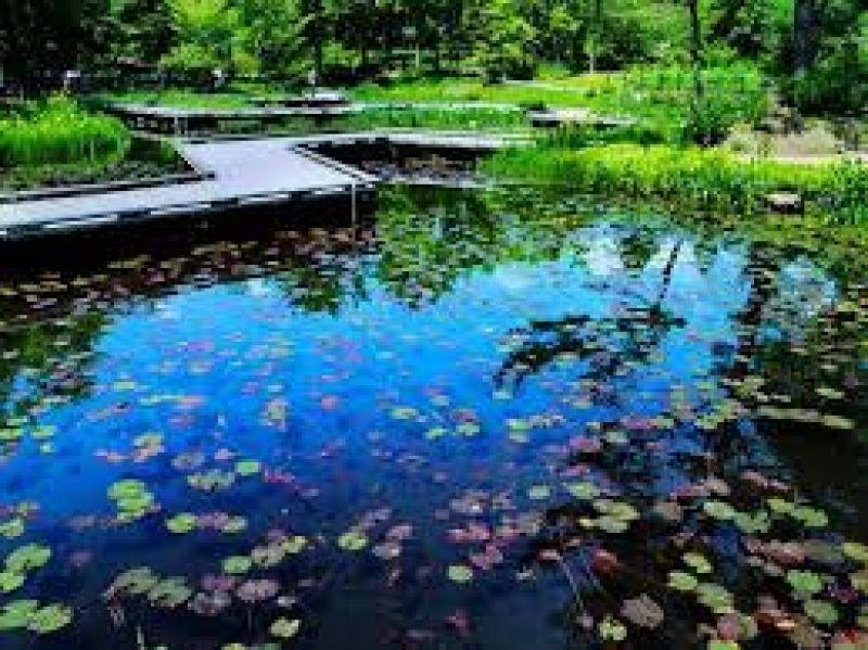 plant garden