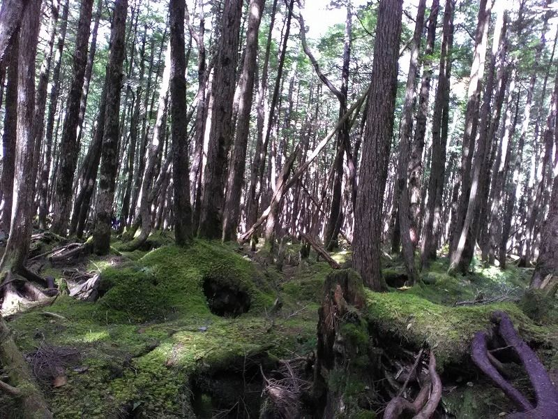 Northern Yatsugatake Mount Range. Covered with moss through the year.