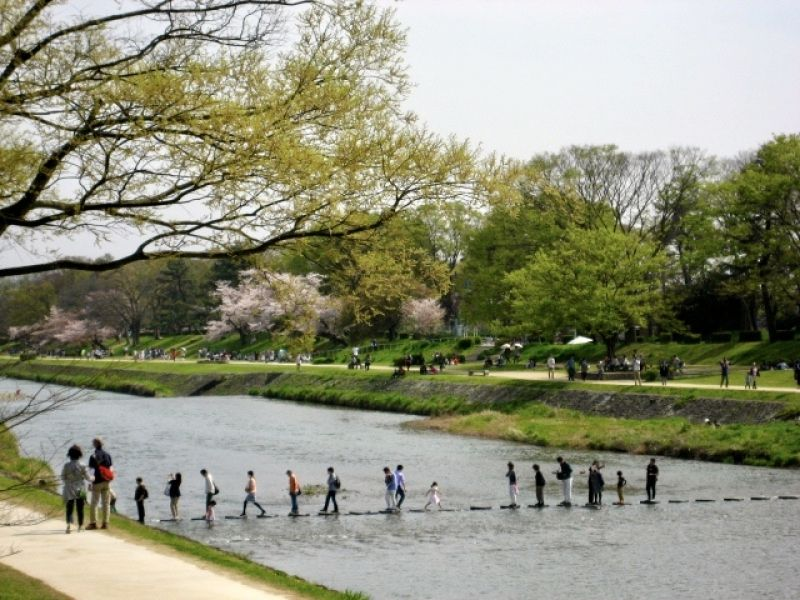 Kamo river in Kyoto-city; it is loved by most of the Kyoto residents.