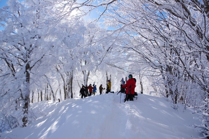 The forest of Mt. Madarao in Winter.