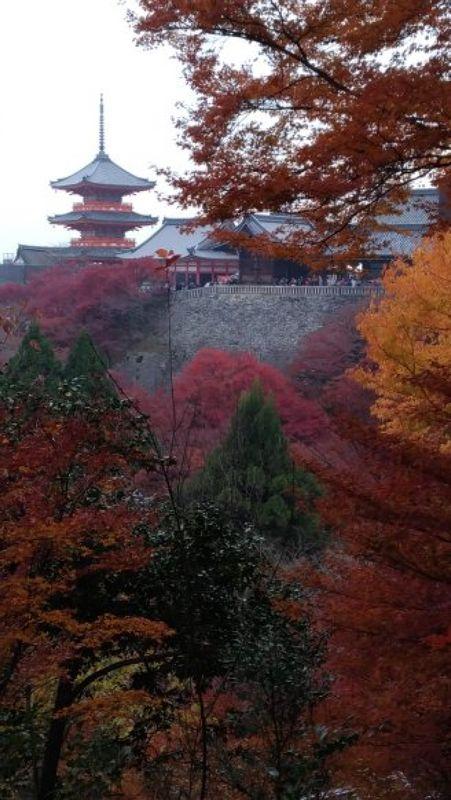 El templo Kiyomizudera en la epoca de hojas otonales