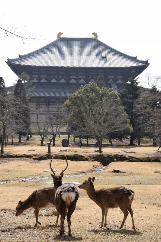 El Salon de Gran Budha del Templo Todaji visto detras