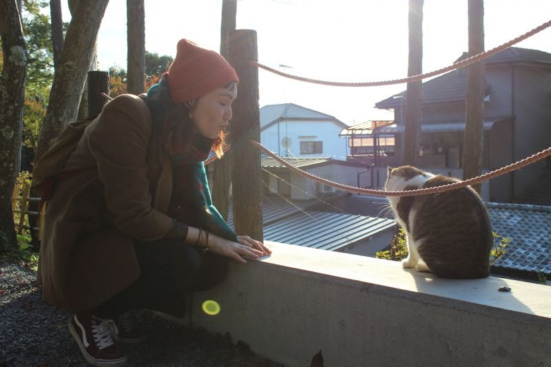 Kyoto is always welcome for cat lovers