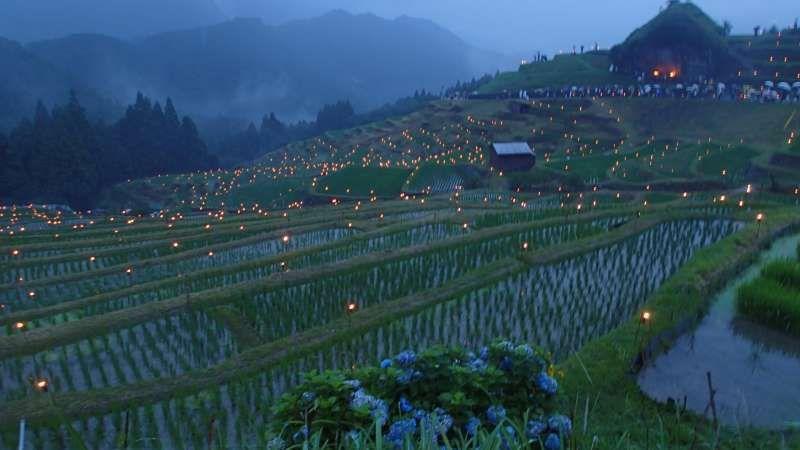 Rice terrace in Wakayama