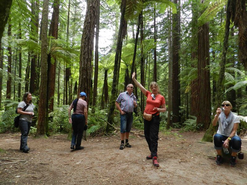 Kirsten explaining about the redwood trees in Whakarewarewa forest in Rotorua