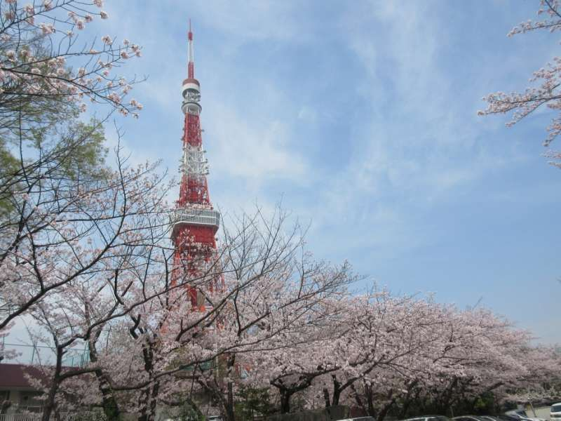 Cherry blossoms with Tokyo tower, Tokyo