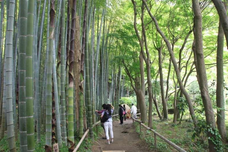 bamboo forest at Eisho-ji temple, Kamakura, Kanagawa