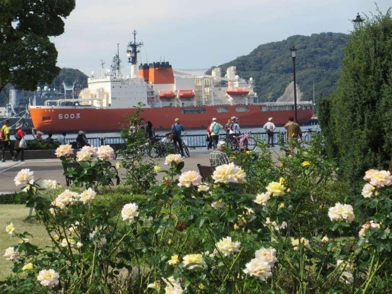 Rose flowers at Verny Park, Yokosuka, Kanagawa