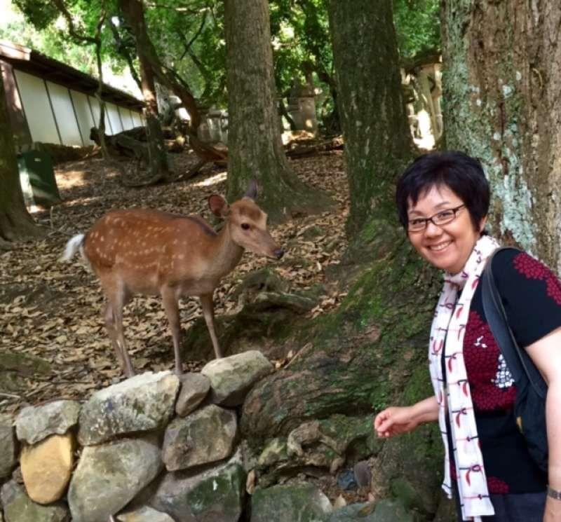 A fawn at Nara Park.