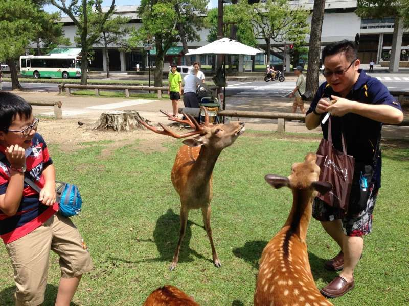 My guests from Hong Kong playing with deer in Nara Park