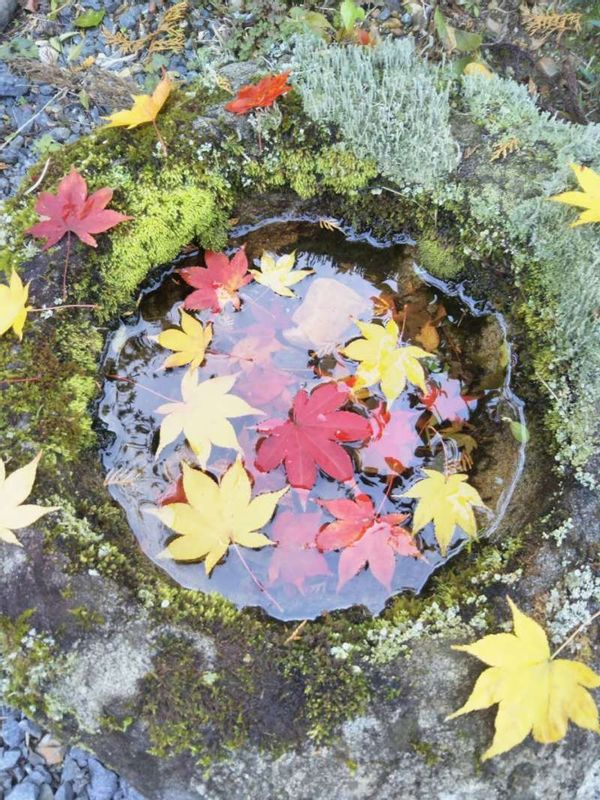 Autumn Leaves in water basin
