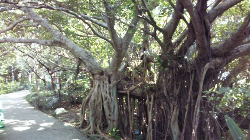 Walking in the little forest by the shuri castle, here is historical and traditional place.