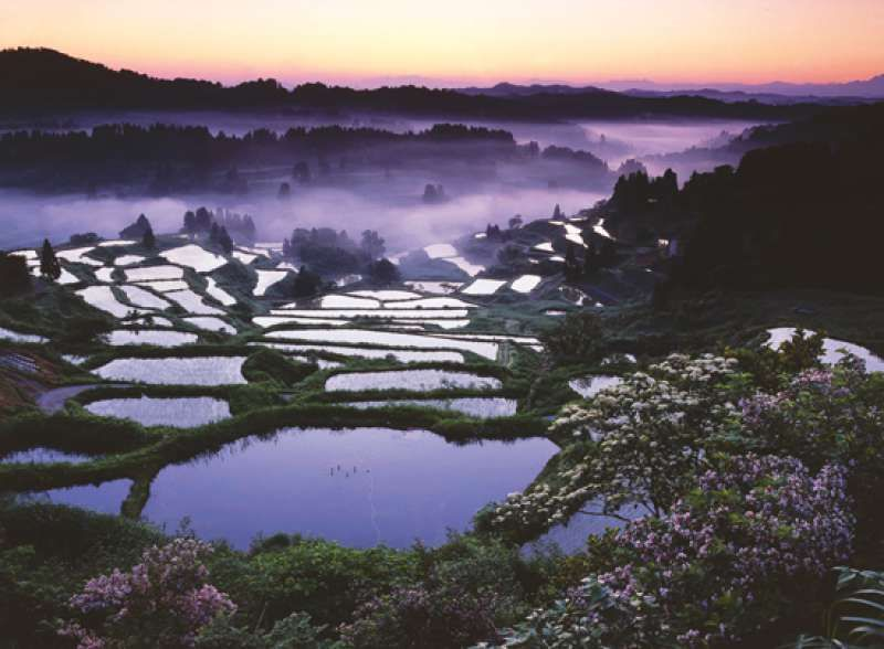 Rice Terrace view from Hoshitoge (literally means Star Pass), Tokamachi-city in Niigata prefecture. It is the #1 ranked most popular rice terrace spot for foreign travelers to visit in Japan.
