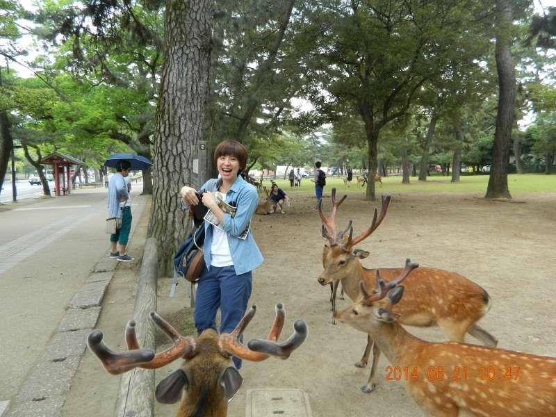 Nara Park in Nara city, Nara Pref. 奈良公园在奈良县
