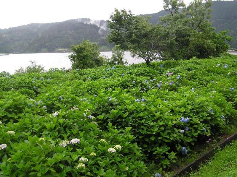 Lake Yogo in Nagahama city, Shiga Pref. 余吴湖在滋贺县