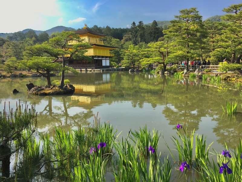 Kinkakuji Temple in spring
