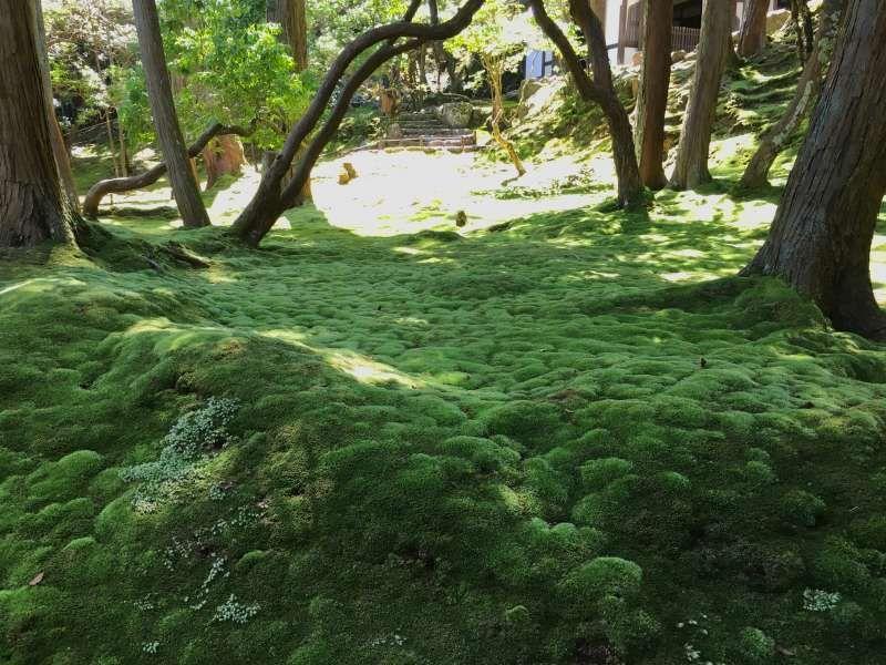 in the moss garden of Kokedera(Saihoji Temple)