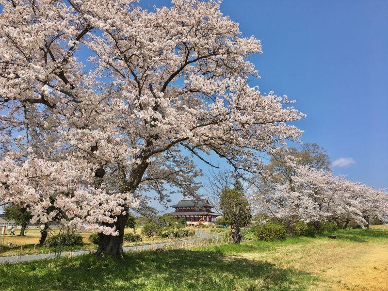 at Heijokyu Palace Site in Nara
