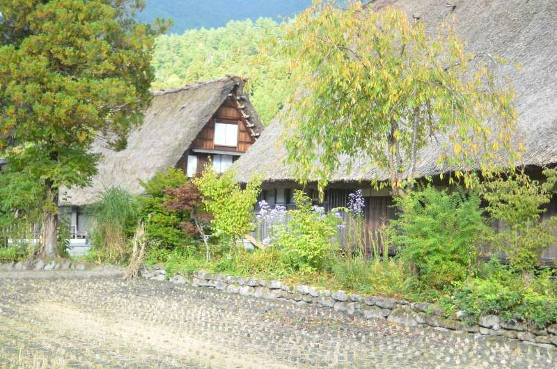 Shirakawa-go, well known village with traditional thatched roof architecture.