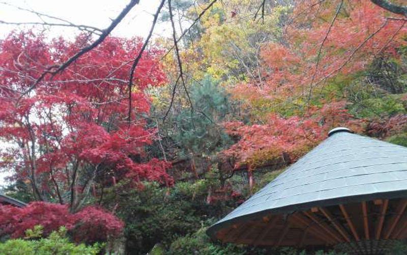 Autumn leaves at Aikawa Gold Mine