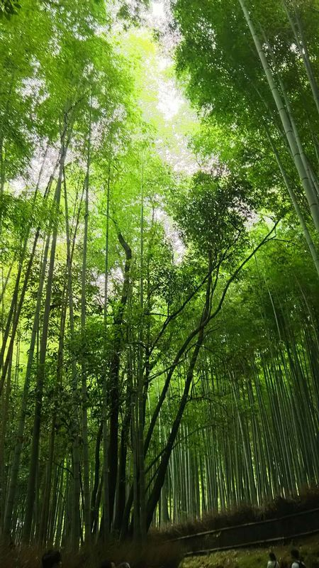 Bamboo groove in Kyoto