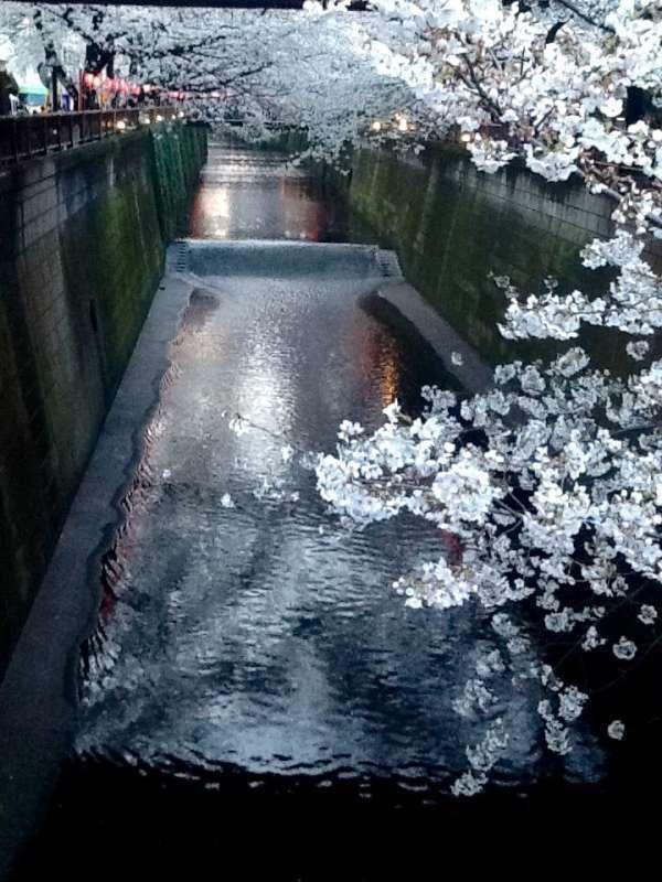 Meguro River(目黒川)