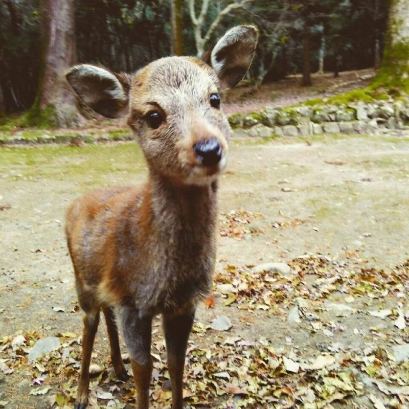 By chance, you can find small deer in Nara.