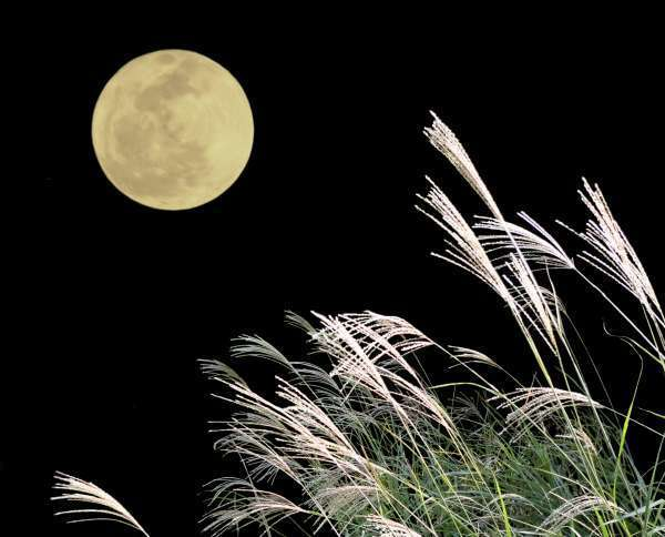 The Moon Viewing Tradition in Japan
