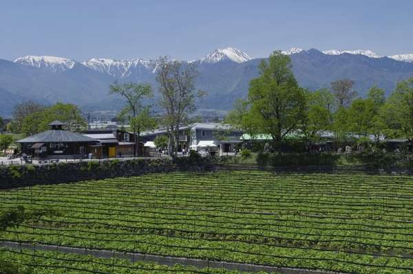 5 Things to do on a Day Trip to Nagano