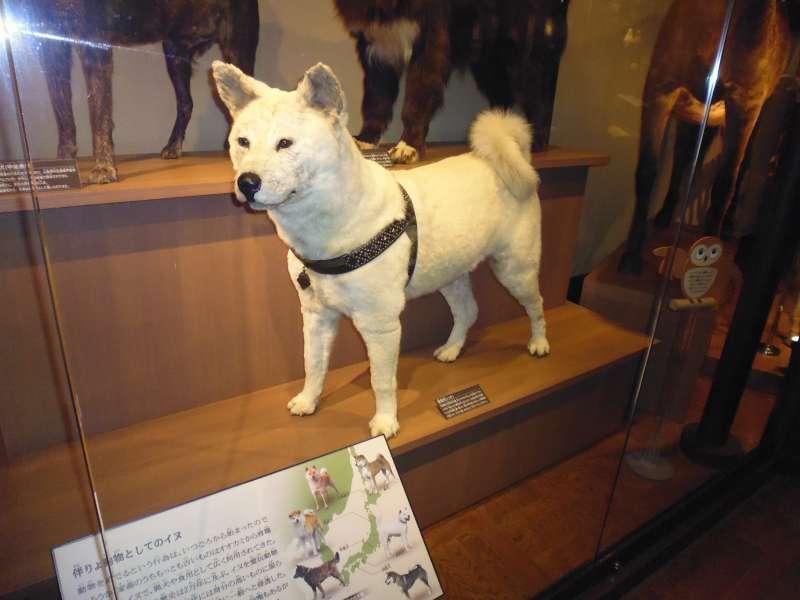 What a loyal dog!