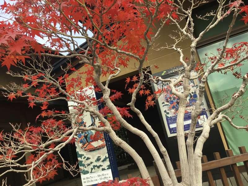 Omiya Bonsai Museum in Saitama Prefecture
