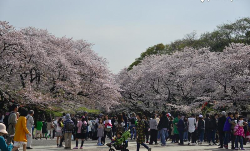Attractions in Tokyo - map, access, and more