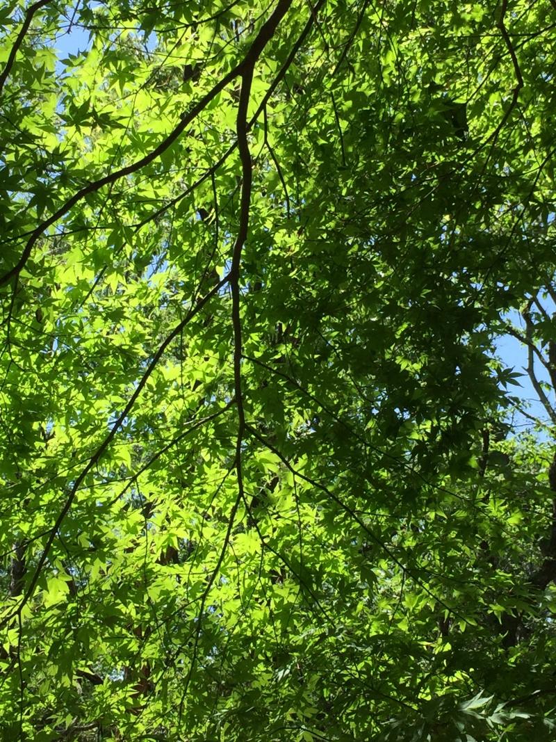 The Great Traverse on Trails of Surrounding Mountains around Lake Yogo