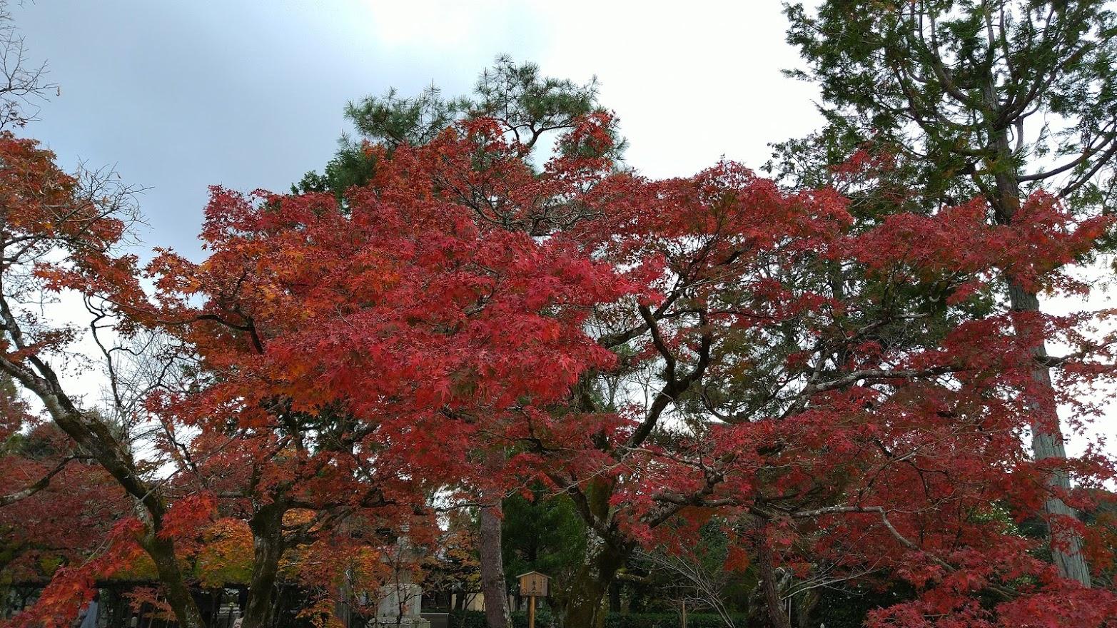 El otoño ha llegado..