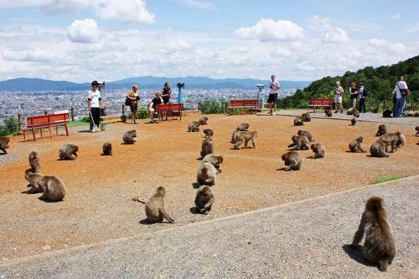 Three Places to Enjoy Monkeys