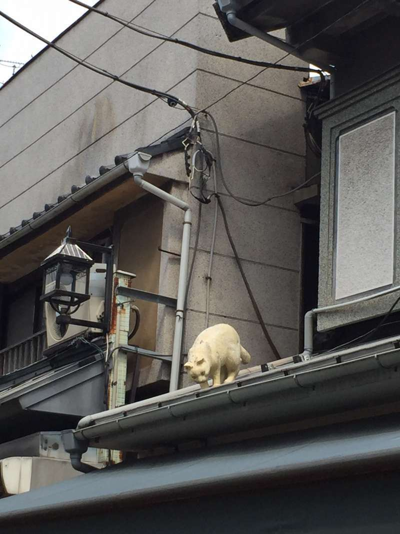 Look out!! There is a cat!! Wait,wait. Is this a real one?