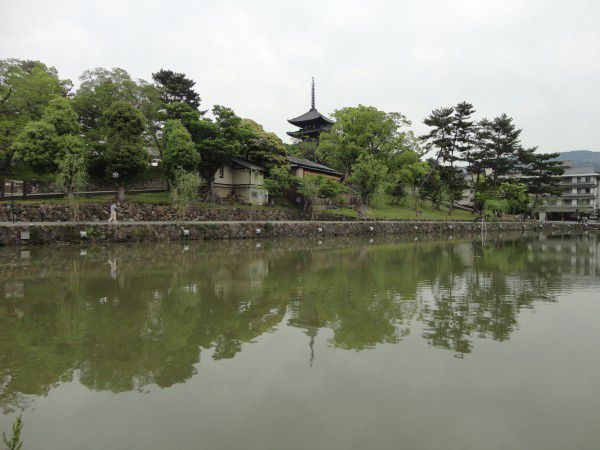 Five Story Pagoda at Kofukuji Temple is reflected on Sarusawa Pond.