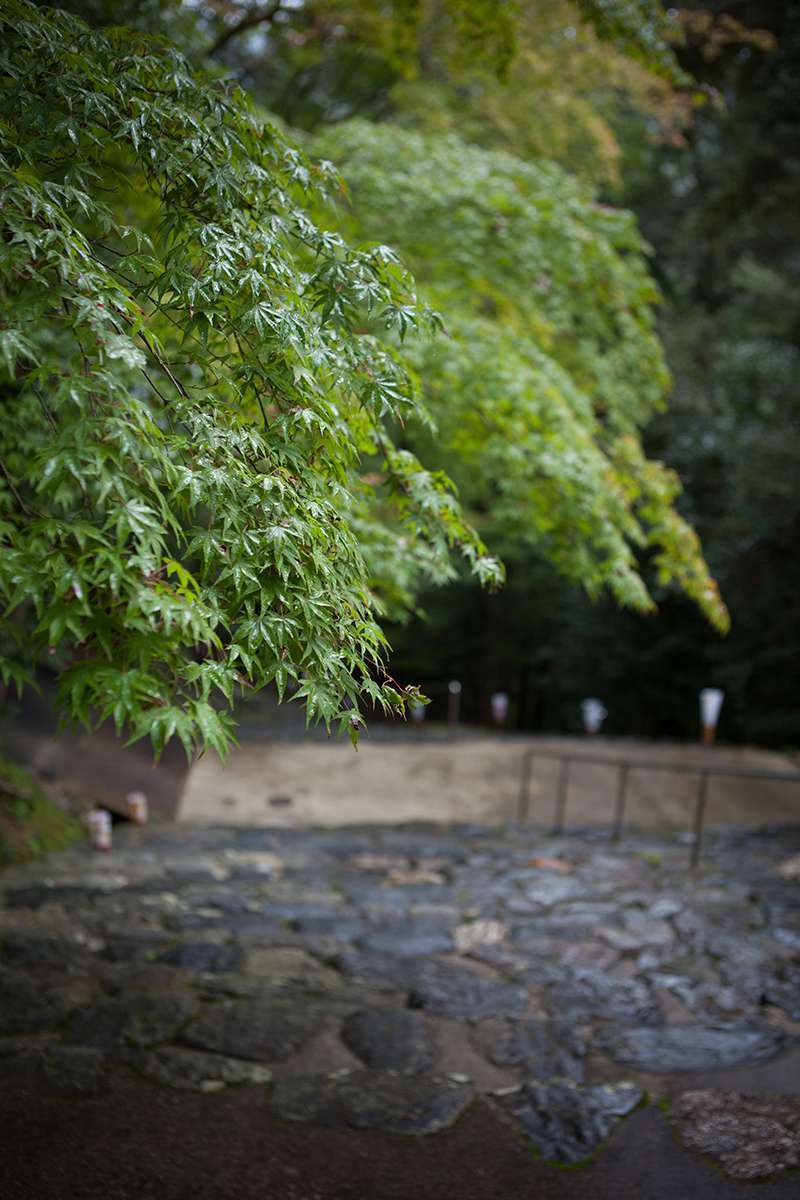 At Jingo-ji Temple