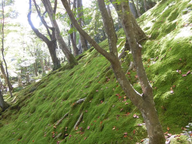 Moss-covered slope at Johjako-ji Temple