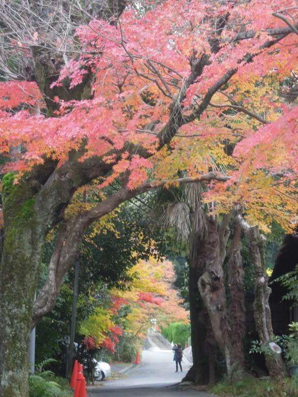 On the way to Jojjako-ji Temple, Arashiyama