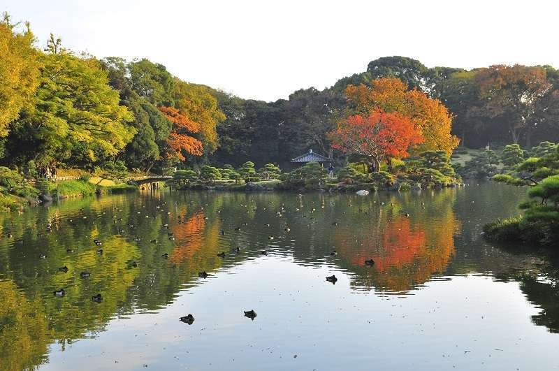 9. Kiyosumi Garden is especially popular for its beautiful autumn foliage, but you can enjoy many kinds of plants throughout the year in the traditional Japanese-style garden.