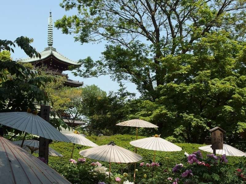 8. Ueno Park was designated in 1873 as the first park in Japan. You can enjoy the historic atmosphere in the park and visit the museum complex nearby.