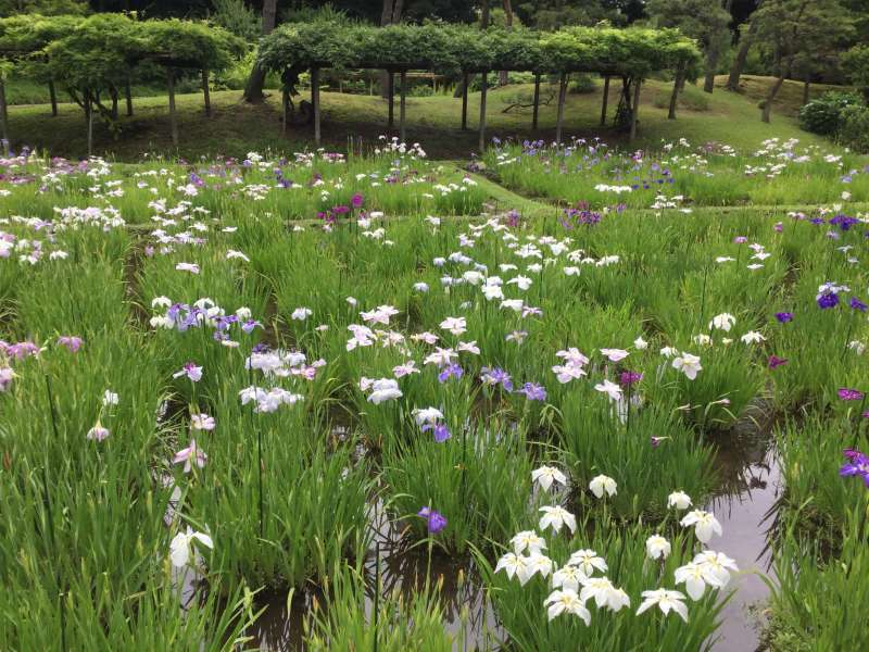 Wonderful Japanese Gardens In Tokyo Tokyo Private Tours Gowithguide